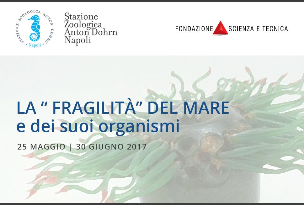 """La """"fragilità"""" del mare e dei suoi organismi"""