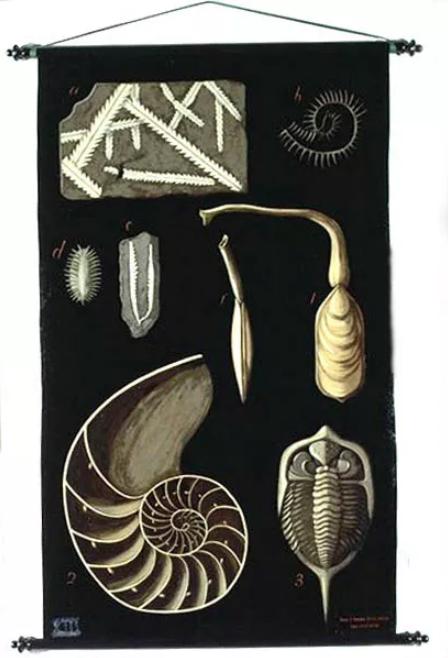 EGISTO TORTORI -PALEONTOLOGIA- fossili e fossili viventi del Siluriano