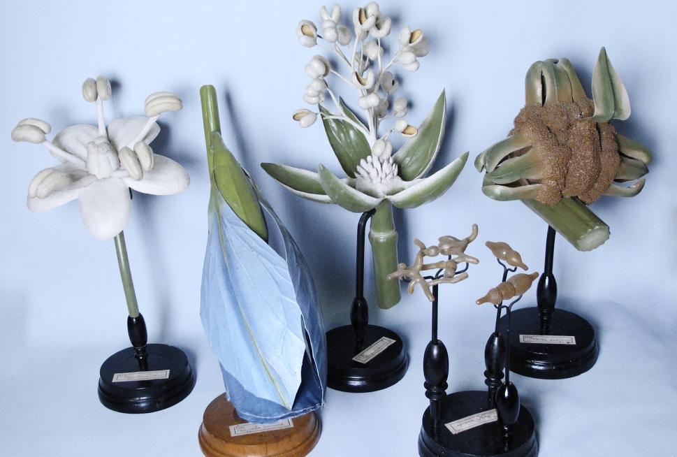 I fiori ritrovati